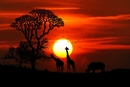 Bild für Kategorie Afrika / Naher Osten / AsienOsten/Asien