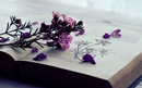 Bild für Kategorie Natur / Garten / Bestimmungsbücher / Tierhaltung